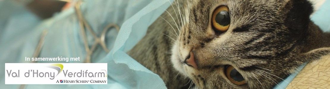Weke delen chirurgie kat: het gastro-intestinale systeem